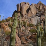 Village Grove Homes for Sale in Scottsdale AZ